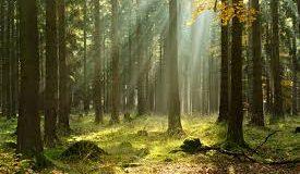 Száz év, dupla erdő